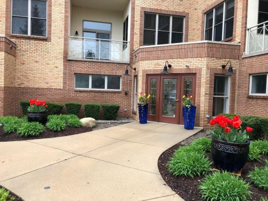 DTP spring 2019 entrance tulips